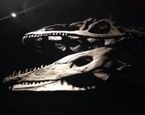 dinosauri-giganti-dall-argentina-mudec-1