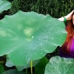 Parco Giardino Sigurtà: l'evento Cosplay di Settembre a Valeggio sul Mincio