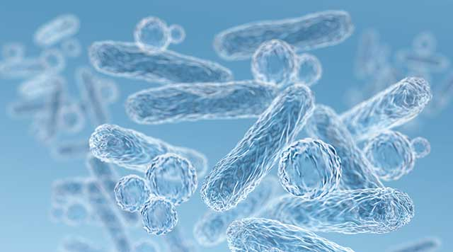 Étude du microbiome : Les bactéries responsables des maladies des gencives