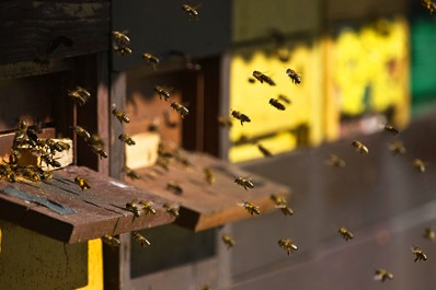 curs de apicultura online