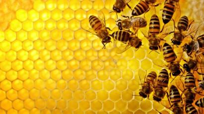 lectii de apicultura online