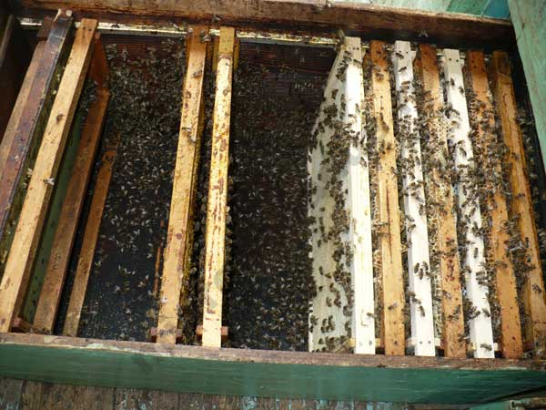 cum sa organizez cuibul la albine