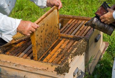 cuibul albineor, organizarea