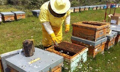 cum sa cresti productia de miere