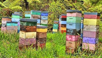 cum sa dublezi productia de miere