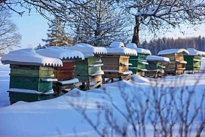 impachetarea albinelor