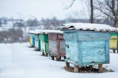 pregatirea pentru noul sezon apicol