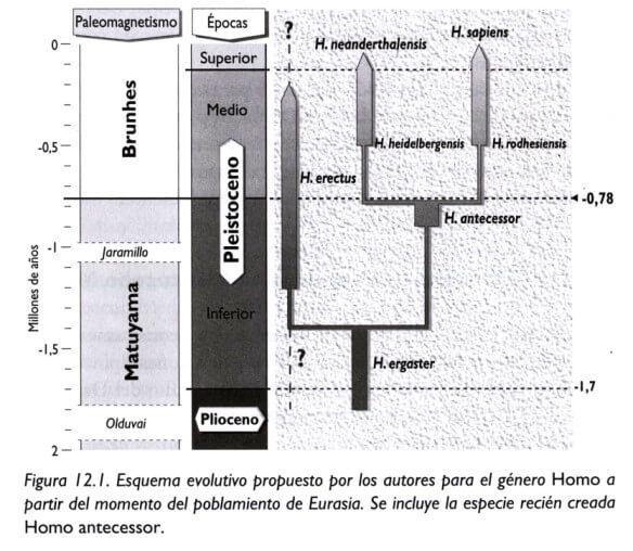 Homo Sapiens - Esquema evolutivo