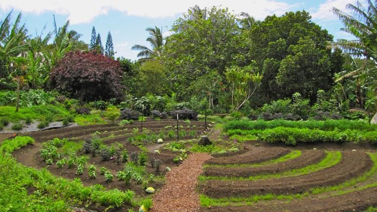 Permaculture : le bon sens