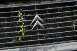 Cimetiere de voitures Citroën LNA