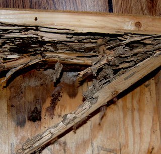 Termite and Water Damage Repairs