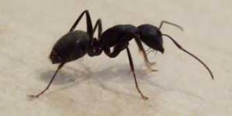 Commercial Ant Control