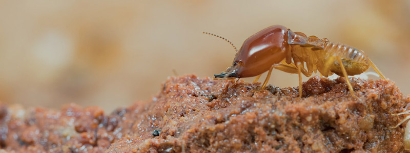 Service Area - Termite Control Services