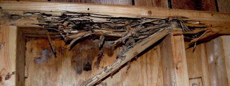 Service Area - Termite Damage