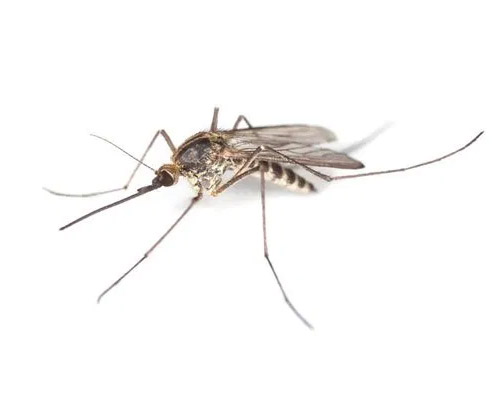 Service Area Residential Pest - Mosquitoes