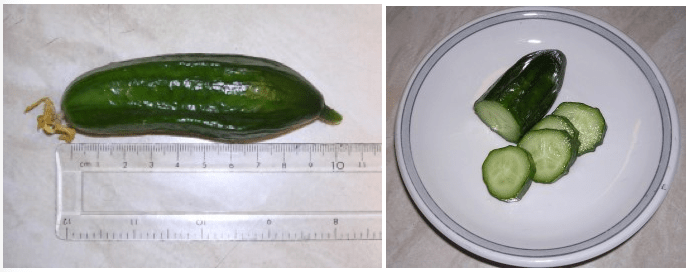 Image showing one of the cucumbers grown under LED grow lighting