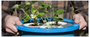 Image of the Grow Float, a simple table-top hydroponic system