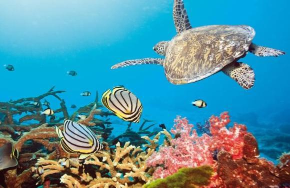 Australia: La Grande Barriera Corallina è ormai danneggiata dei due terzi a causa dello sbiancamento.