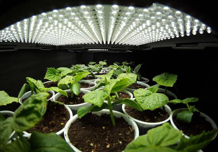 top rated led grow lights