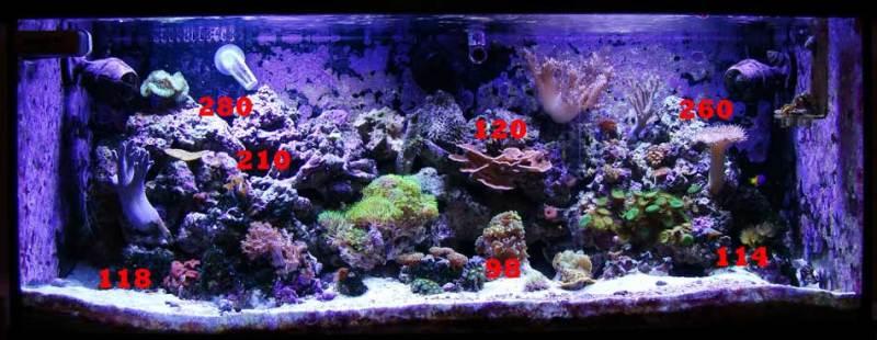 Download 720 Koleksi Background Aquarium Untuk Louhan Gratis