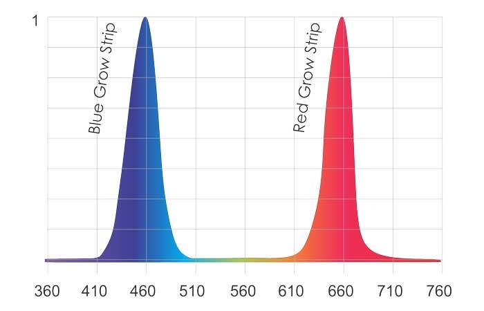Triple Bright Grow Strip Graph