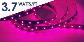 Pink LED Strip HH-S2835P-60-24-5M-PINK