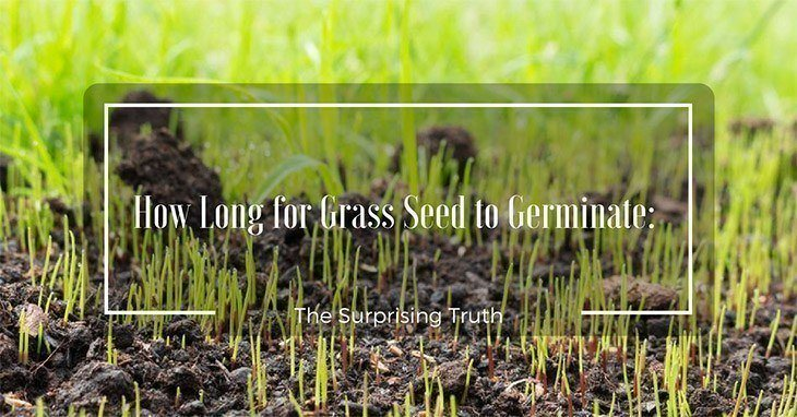 How Long For Grass Seed To Germinate The Surprising Truth