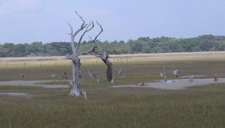 Salt marsh near Savannah, Ga.