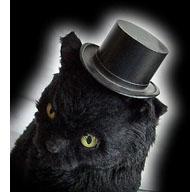Top Hat Kat