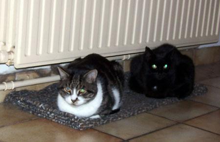 Pitoeke en Beamer bij de verwarming
