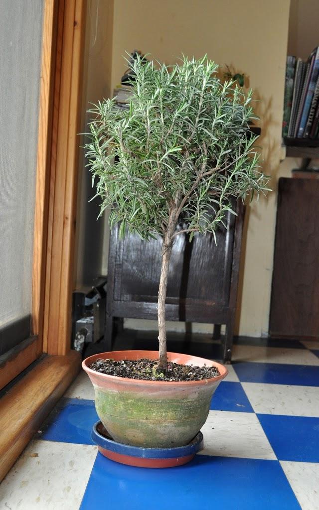 Thanks(soil)giving, Chokes, & Rosemary