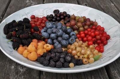 Berries of July