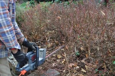 Shearing lowbush blueberries