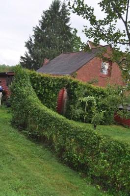 Privet hedge melding into tea crabapple hedge