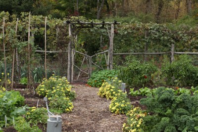 Yellow zinnias line the main path in the vegetable garden