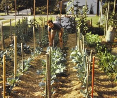 Me mulching, even as a beginning gardener