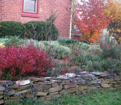My heath bed in autumn