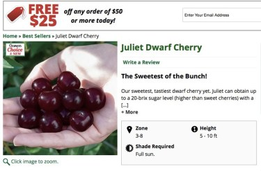 Advertisement for Juliet cherry