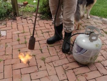 Flame weeding