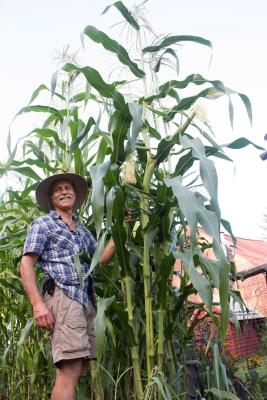 Golden Cross Bantam corn