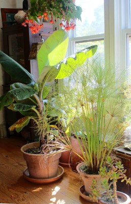 Tropical plants indoors
