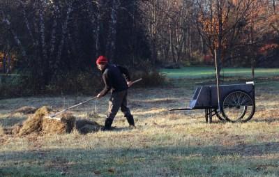 Raking hayfield