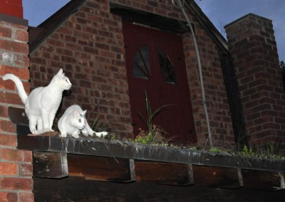Two cats on my green roof