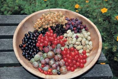 Summer's berries