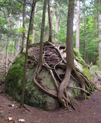 Tree roots and rock