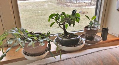 Houseplants at living room window