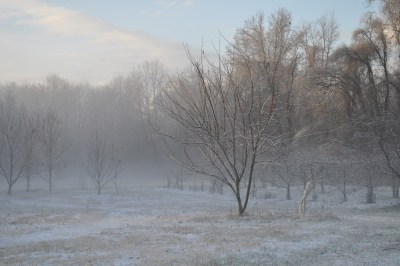 South field, winter view