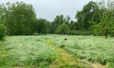 Meadow of wet grass, with dogs
