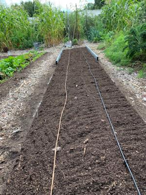 Corn bed, composted