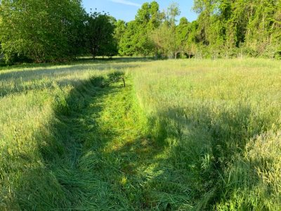 Meadow with path